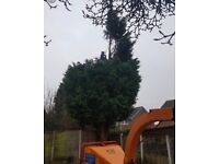 Site maintenance Tree services & Ivy removal