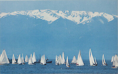 Sailboats from Victoria BC Olympic Mountains WA Wash. Sea Unused Postcard D32