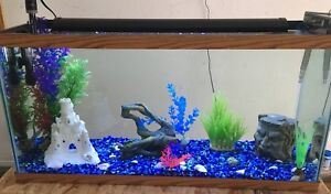 40 gallon fish tank and accessories