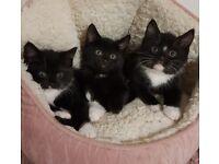 Cute Playful Kittens Ready
