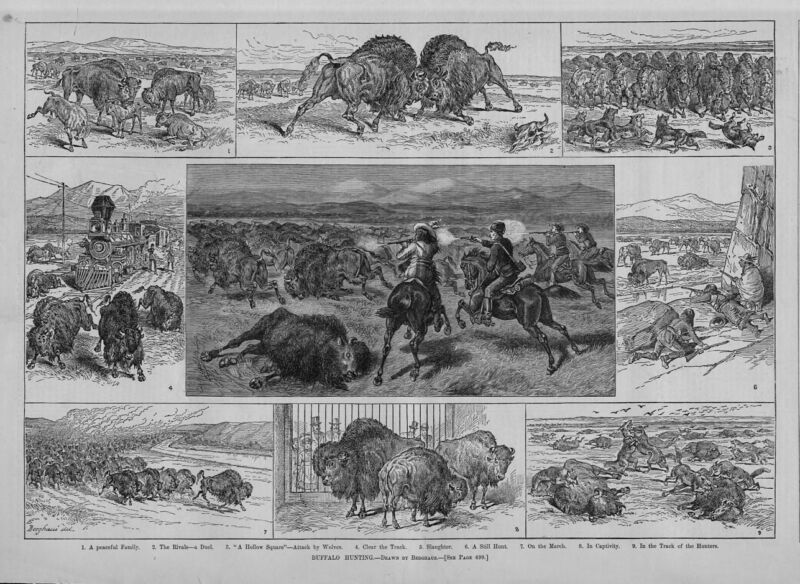 BUFFALO HUNTING CUSTER DESTRUCTION EXTERMINATION SLAUGHTER RAILROAD HUNT BUFFALO