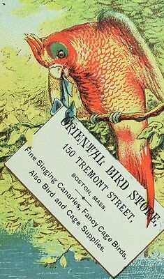 1870's-80's Oriental Bird Store, Singing Canaries Parrot Boston Trade Card F97