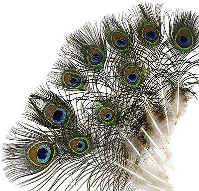 25 Pcs MINI PEACOCK Natural EYE Feathers 4-10