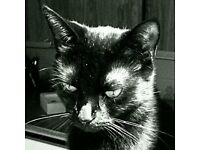 Beatiful Cat - 5 years old - Free to good home.