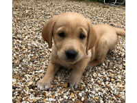 Dog- in Hampshire | Dogs & Puppies for Sale - Gumtree