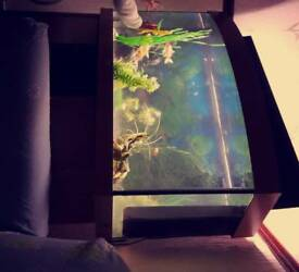 Jewel fish tank