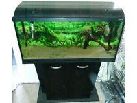 FLUVAL DUO DEEP 1000 AQUARIUM/FISH TANK + 2 DOOR CABINET - FULL TROPICAL SETUP