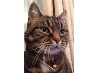LOST BROWN TABBY CAT - TIGERLILY went missing from Sawbridgeworth on 23rd Nov, we moved from Enfield