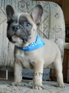 Puppies Kijiji In Alberta Buy Sell Save With Canada S 1