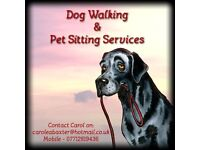 Carol's Dog Walking and Pet Sitting services