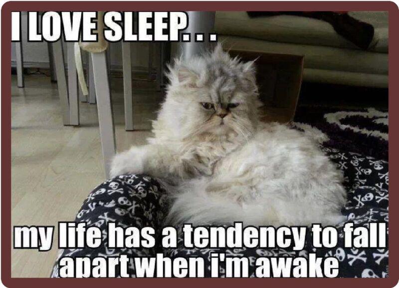 Funny Cat Humor I Love Sleep Refrigerator Magnet