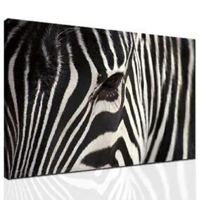 Zebra Room Decor eBay