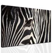 Zebra Print Room Decor