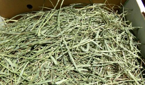 8 lbs.Of Great Fresh Timothy Hay! Great For Rabbits, Guinea Pigs Get 2 Bales