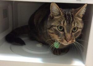 LOST CAT IN ST. ALBERT