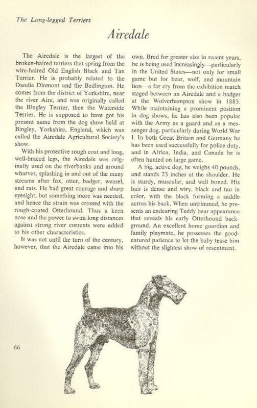 "The Airedale Terrier - Vintage Dog Art Print - Matted ""G"""