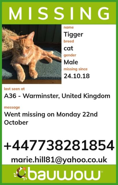 MISSING Ginger tom | in Warminster, Wiltshire | Gumtree