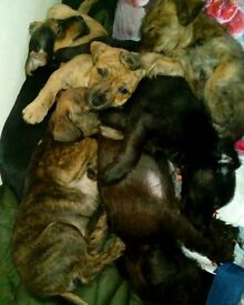 Puppies for sale ready to leave now