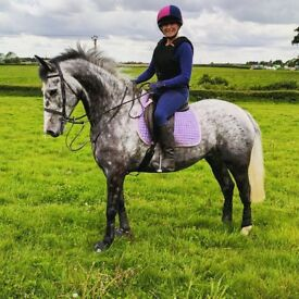 Beautiful 15.2hh mare for share - forward going, fun allrounder