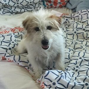 DOG FOUND- THX TO ALL! Lambton Newcastle Area Preview