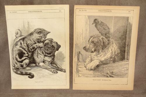 7 VINTAGE DOG PRINTS 1885-1891 CHATTERBOX SPANIEL HOUND ST. BERNARD PUG MASTIFF