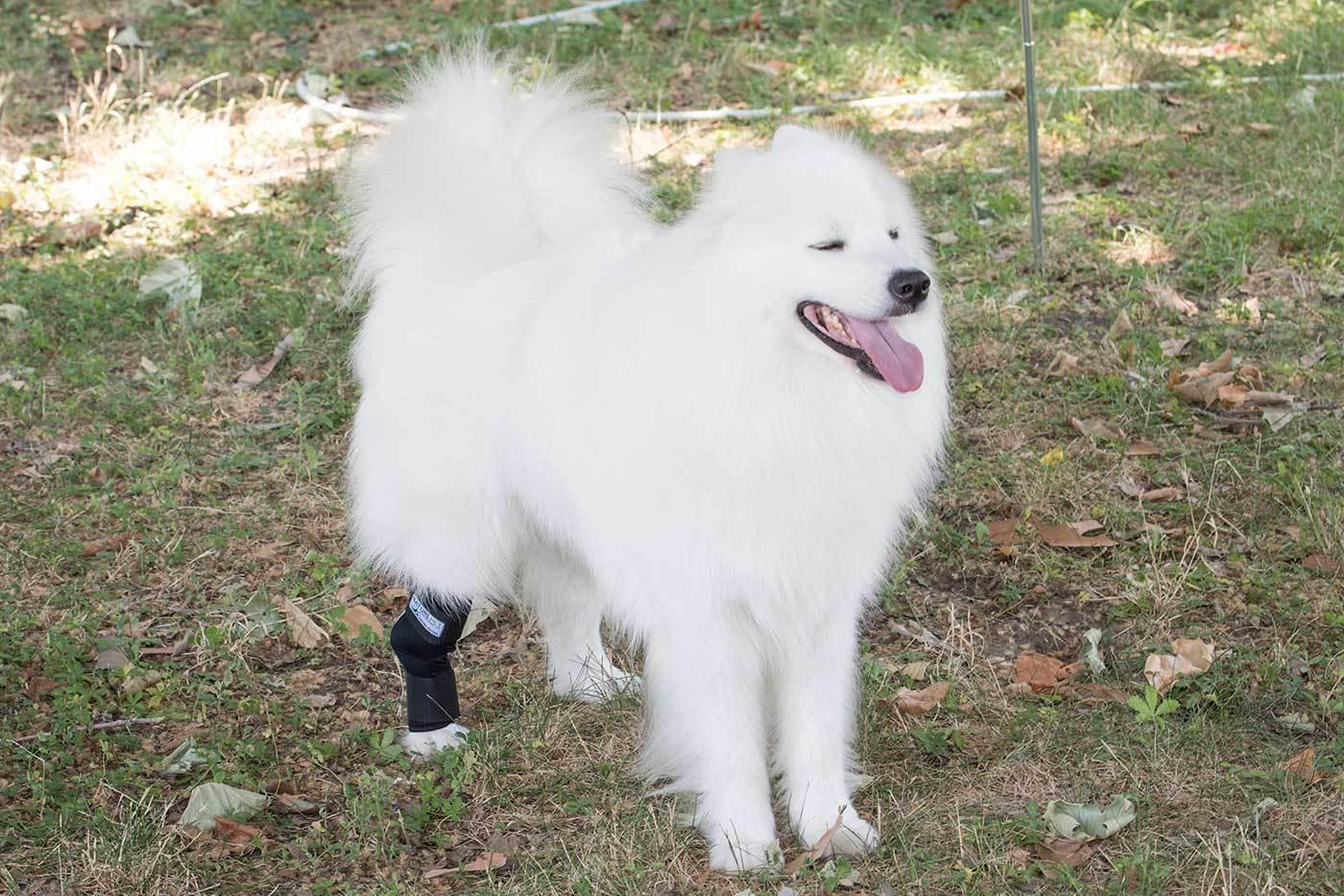 ARTICOLAZIONE DELLA CAVIGLIA Protezione Fasciatura 135° per cani / tarsalgelenk