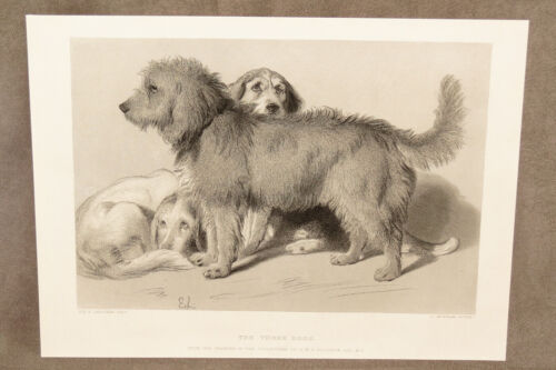 "VINTAGE EDWIN LANDSEER PRINT TITLED THE THREE DOGS MEASURES 8 3/4"" BY 11 3/4"""