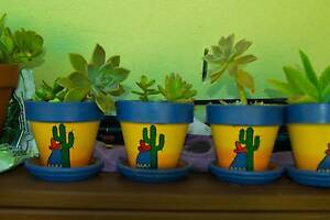 Succulent and Cacti Gardens  in Ceramic and Terracotta pots $5.00 Mudgeeraba Gold Coast South Preview