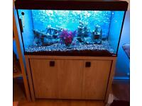 Fluval Roma 200 Fish Tank And Stand