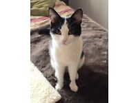 Missing Cat - Staynor Hall Selby