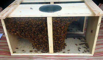 1.5 kg Package bees and mated 2020 Buckfast queen