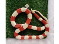 Nelson's milk snake (albino form).