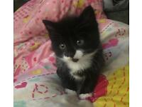 Adorable fluffy black and white boy 8 week