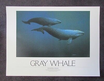 Gray Whale  By Mike Patrick Print 1986