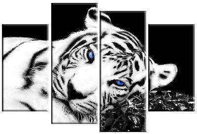 TIGER CANVAS PICTURE BLACK WHITE BLUE EYES WALL ART 4 PANEL SPLIT MULTI 100cm