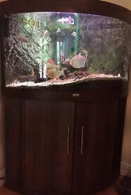 JUWEL TRIGON 190 LITRE CORNER FISH TANK & CABINET HOOD T8 LIGHTS FILTER & HEATER - 07544000786