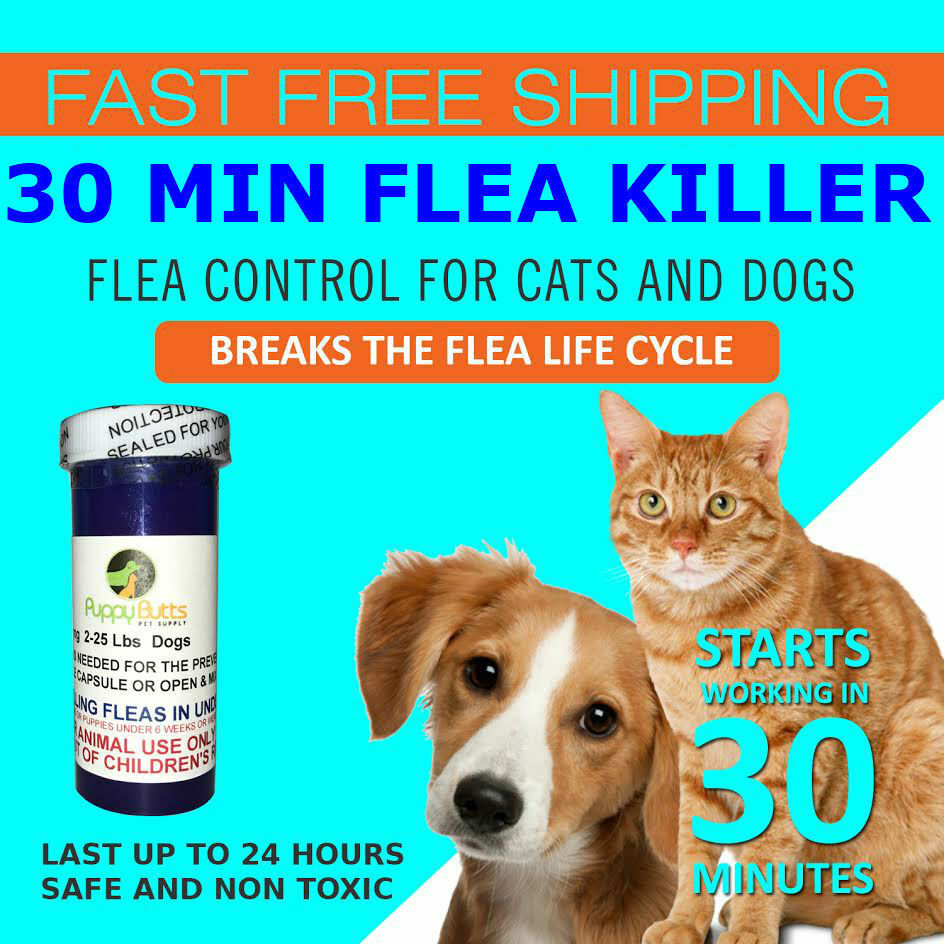 Купить Unbranded - 50 CAPSULES Flea Killer For CATS and DOGS 2-25 Lbs. 12 Mg Quick Results