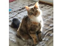 Missing cat - Hucknall (Wigwam Lane area)