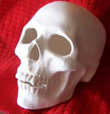 Ceramic Bisque Realistic Skull-from Scioto 711 mold Ready to Paint