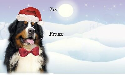 Bernese Dog Self Adhesive Christmas Labels (Pack of 42) by Starprint - No 2