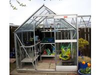 Elite greenhouse 6' x 6' with staging