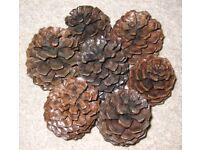 Large Californian Pine Cones