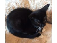 Willow a wee kitten needs a loving home