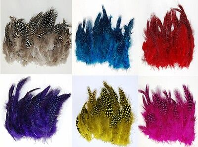 GUINEA PLUMAGE - MANY COLORS TO CHOOSE 1