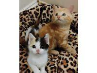 Playfull kittens different price