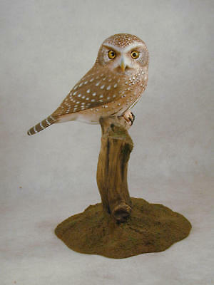 Ferruginous Pygmy Owl Original Wood Carving