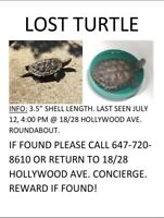 LOST TURTLE IN NORTH YORK