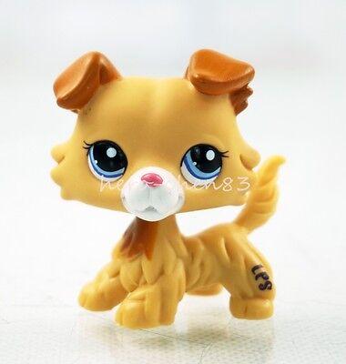 Hasbro Littlest Pet Shop LPS 2452 Rare Collie Cream Yellow Puppy Dog Blue Eyes
