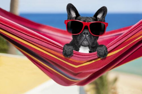 NWT Mainstays French Bulldog Beach Towel
