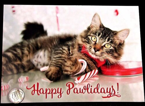CHRISTMAS Tabby Kitten Cat Candy Canes Ribbon - Christmas Greeting Card